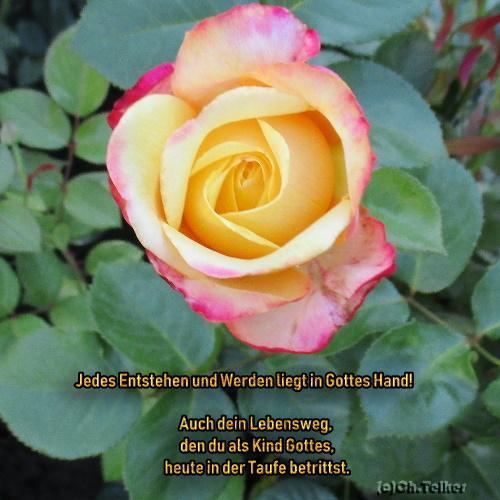 Taufe Garten Der Poesie